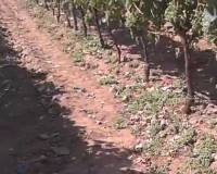 We started with green pruning